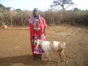 gazelle harambee