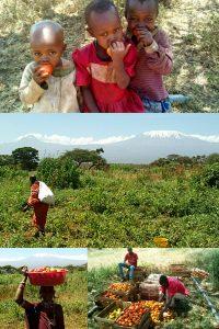 """GAZELLE HARAMBEE Projet """"ATHP"""" 2011 (Kenya)"""
