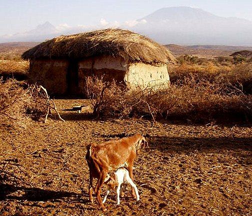 "GHA 2011 (Kenya) ""I GIVE A GOAT ""Project"
