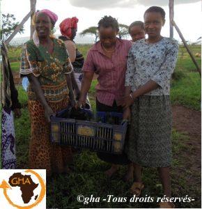GAZELLE HARAMBEE Distribution des plants 2014 (Kenya)