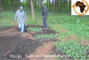 GAZELLE HARAMBEE ACHAT DES PLANTS 2014 (Kenya)