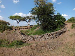 GAZELLE HARAMBEE Ormiti project 2014 (Kenya)