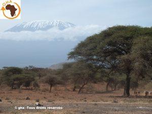 GAZELLE HARAMBEE Kilimanjaro (Kenya 2014)